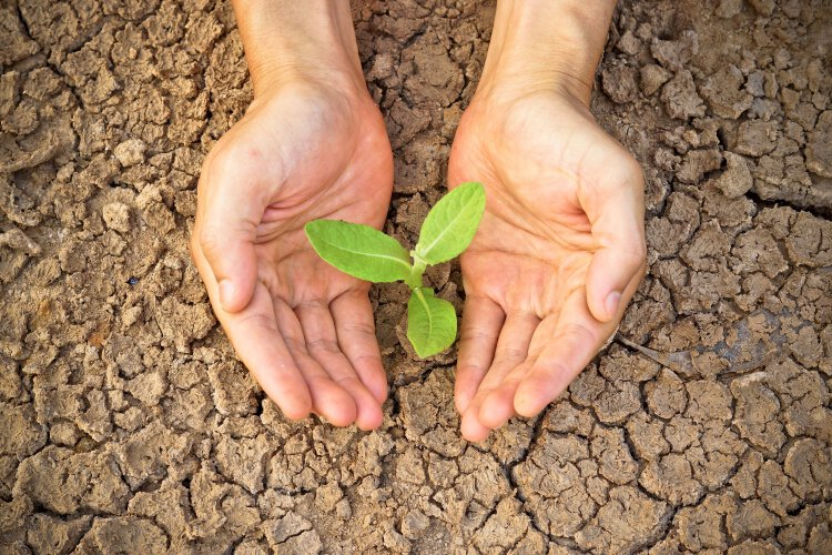 Sarwati foods pvt ltd is looking for hydration solutions for farming in the desert